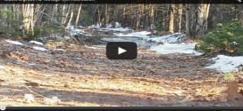 Maine-Bigfoot-sighting