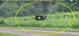 Tiny-Dog-Protects-Owner-from-Bigfoot-