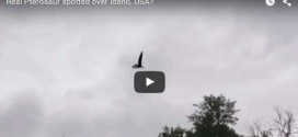 The footage on the video clearly shows a pterosaur-type creature silhouetted against the Idaho skies.