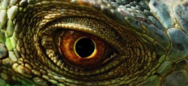 A few months after Davis's encounter, a number of other sightings, as well as damage credited to the Lizard Man of Scape Ore Swamp, occurred in a three-mile radius around the spot where Davis first saw the creature.