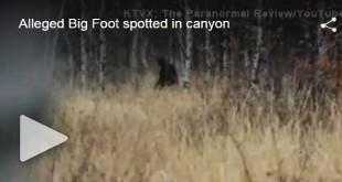 unexpected-Bigfoot-footage