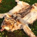 werewolf-rug