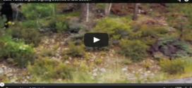 New footage has emerged of a Lake Tahoe Bigfoot sighting near Tahoe City, in Placer County, California taken by a skateboarder just outside the city.