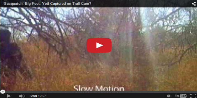 After all these years, was Bigfoot caught on a trail cam? In any case, there's a great campfire story in the making with those darkened images.