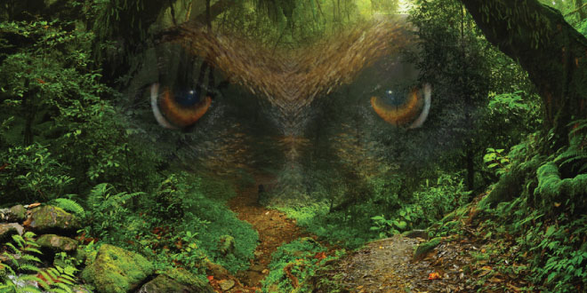 The pair were never sure if they were stalked by Bigfoot that night in the woods but something did follow them for several miles, throwing sticks and rocks.